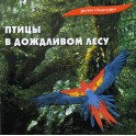 Звуки природы / Птицы в дождливом лесу