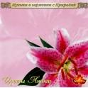 Музыка в гармонии с природой / Цветы любви