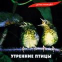 Звуки природы / Утренние птицы